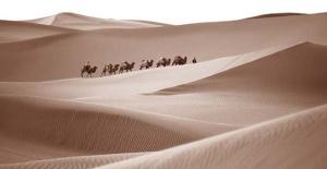 camelscrossingsaharadesert1